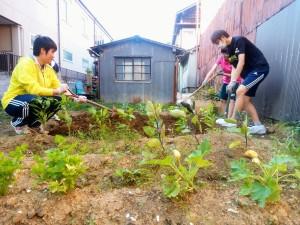 畝作り中②