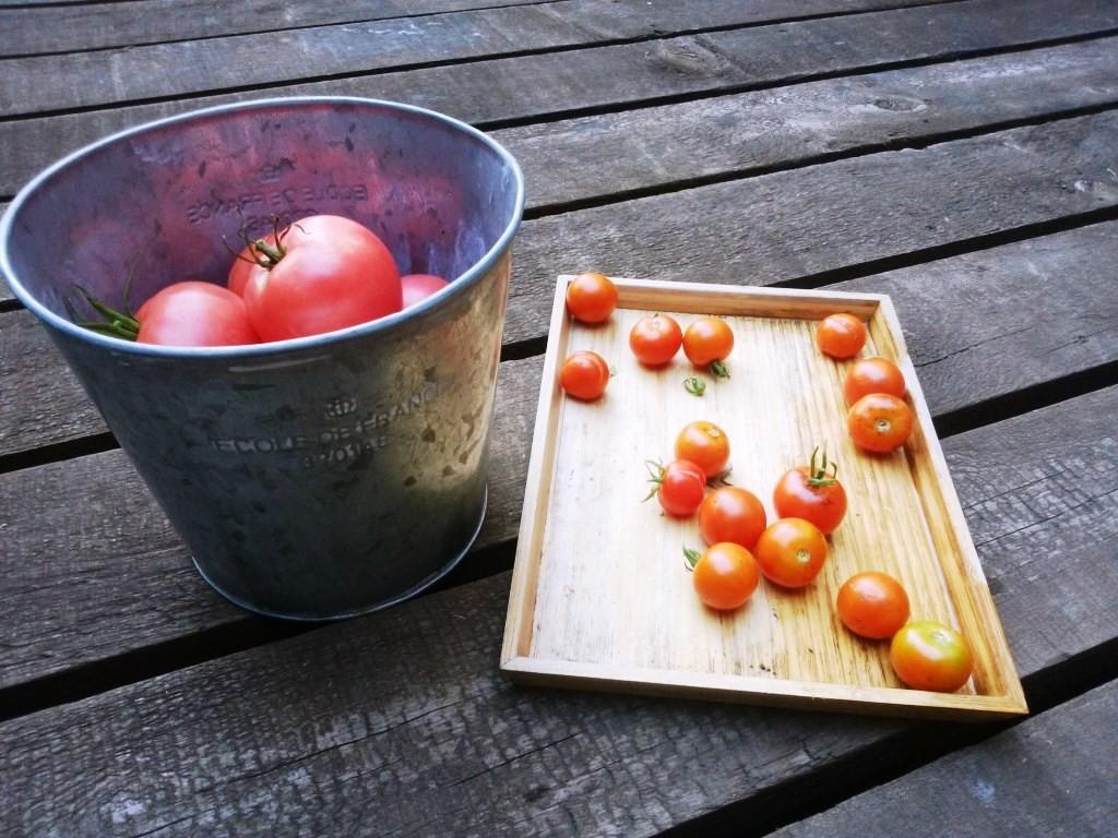 先週の収穫分、ここにきてたくさんトマトが採れてきました!